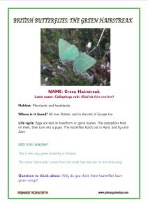 green hairstreak factfile