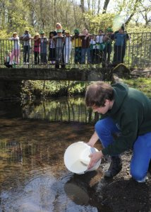 Releasing trout into the River Sheaf