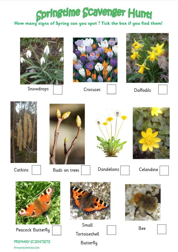 Resource Signs Of Spring Primary Scientists